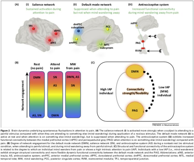 Aquí tienes señalados 3 sistemas involucrados en el mind-wandering y su relación con el dolor